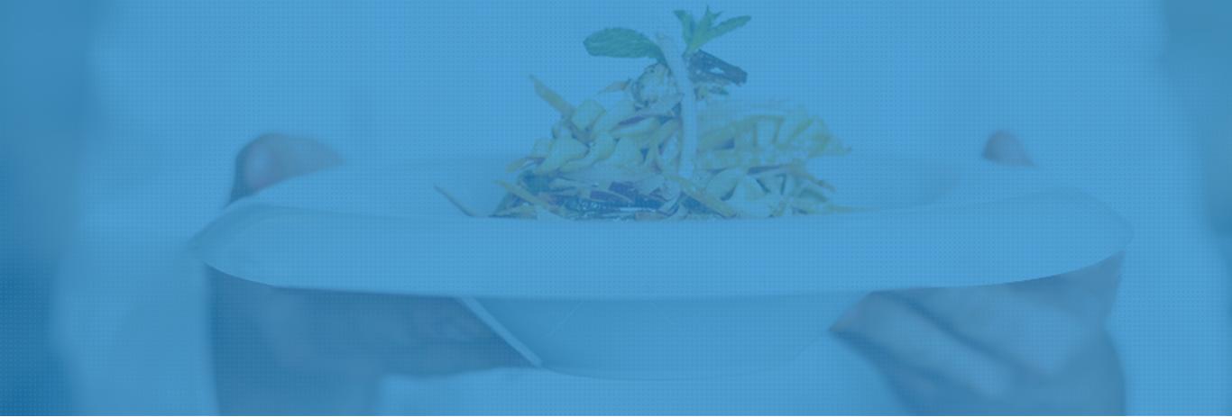 Taste Season Web Design & Development